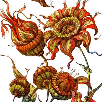 К определителю волшебных растений