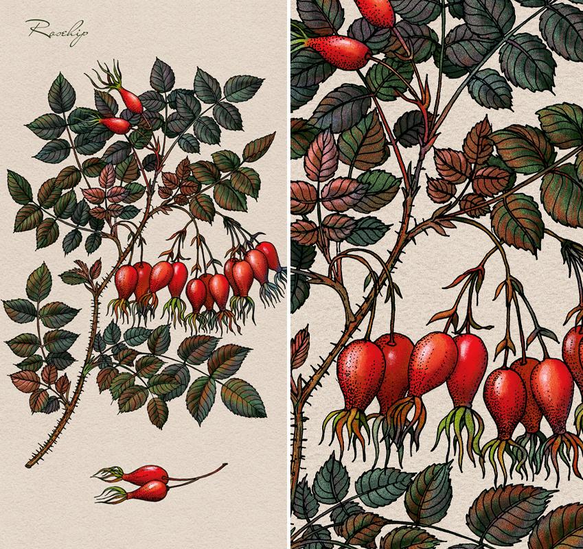 Лекарственные ягоды